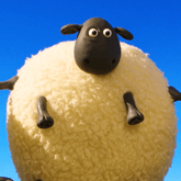 Cute Sheep 123