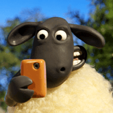 sheepster28271