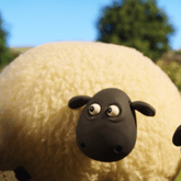 SheepCute