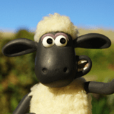 youssef the sheep